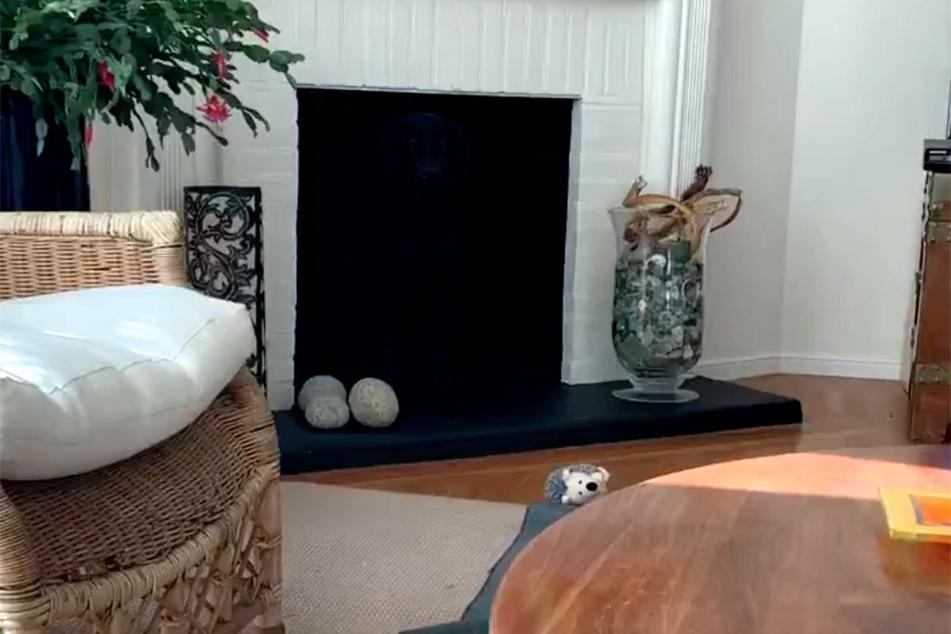 Hund versteckt sich auf diesem Foto, aber wo ist er?