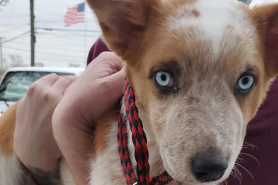 Puppy rescued after being severely abused and nearly thrown into river by his owner