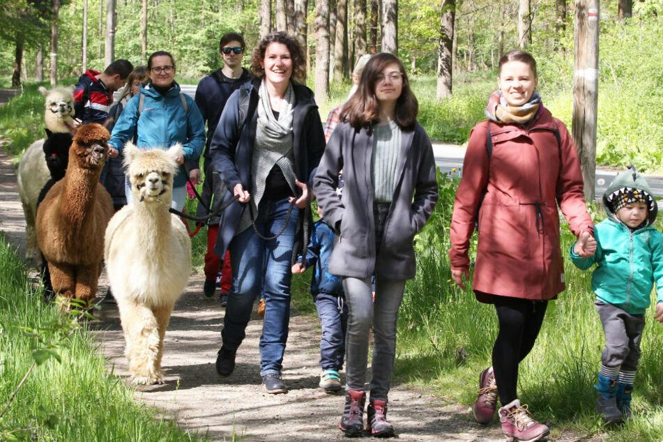 Ausflug mit kuschligem Begleiter: Alpaka-Wanderungen in Plauen