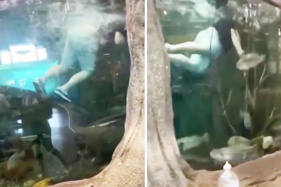 Kevin Wise (26) schwimmt seelenruhig durch ein großes Aquarium mitsamt unzähligen Fischen.
