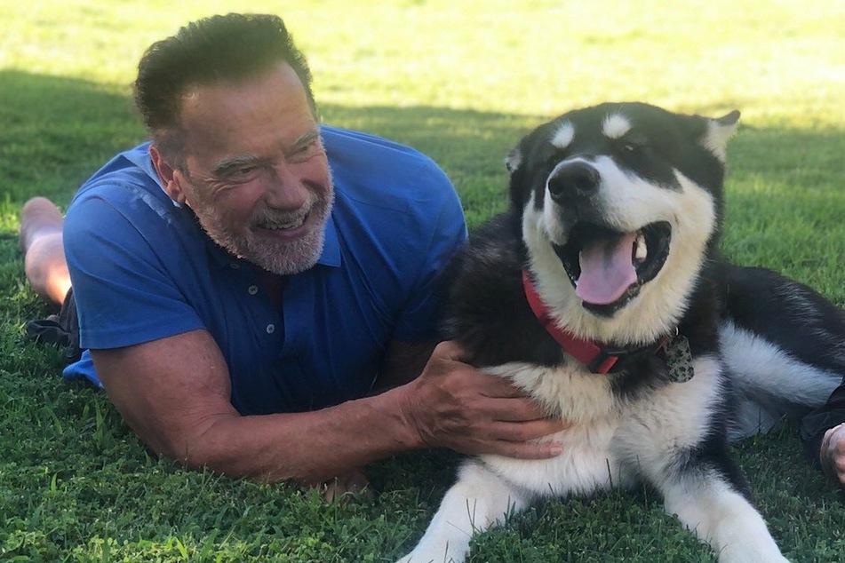Arnold Schwarzenegger präsentiert neues tierisches Familienmitglied