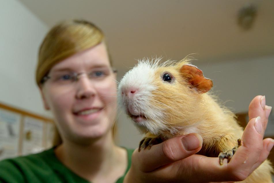 Tierpflegerin Vanessa Haasper (26) kümmert sich liebevoll um die Nager.