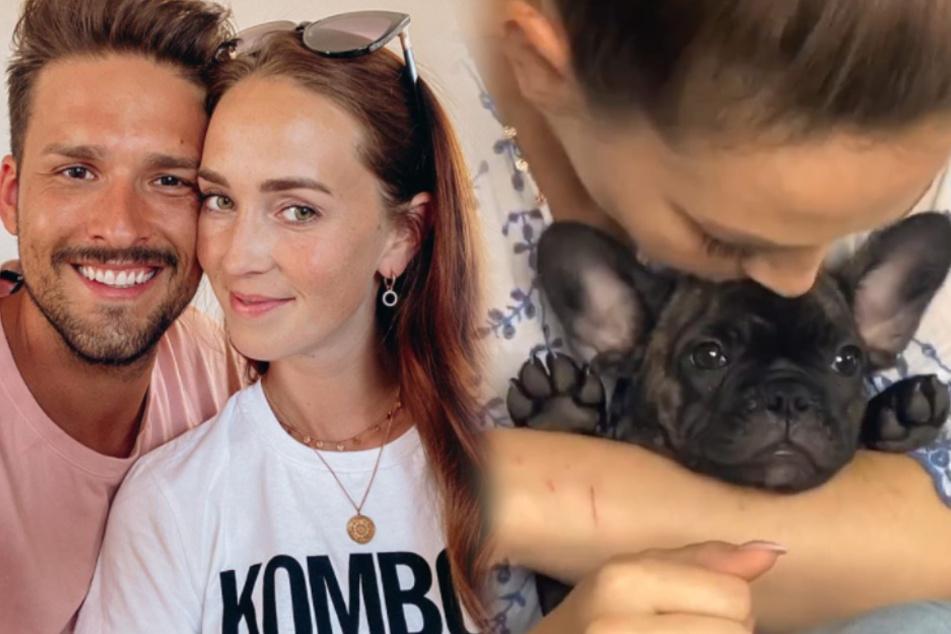 """Bachelor in Paradise""-Paar bekommt süßen Hunde-Zuwachs"