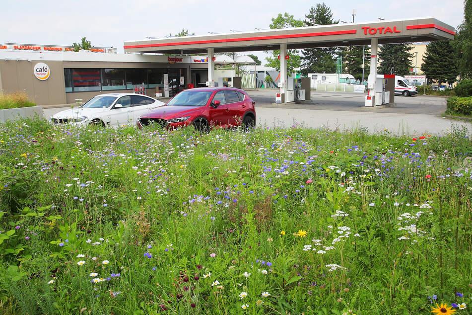 """An der """"Total""""-Tankstelle an der Kesselsdorfer Straße kam es beinahe zu einer Vergewaltigung."""