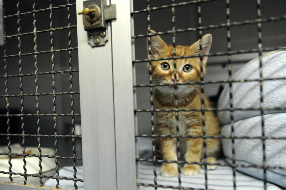Auch wenn man kein Tier bei sich zuhause aufnehmen kann, kann man die Tiere besuchen und sich im Heim mit ihnen ehrenamtlich beschäftigen.