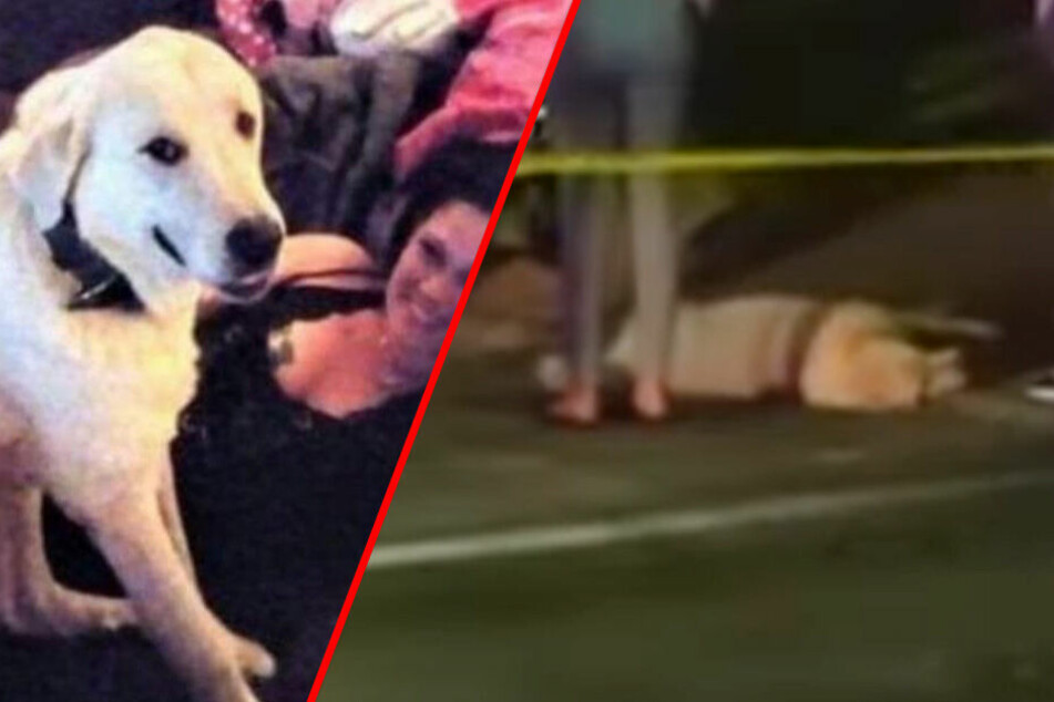 Hund will geliebte Familie retten und bezahlt mit seinem Leben