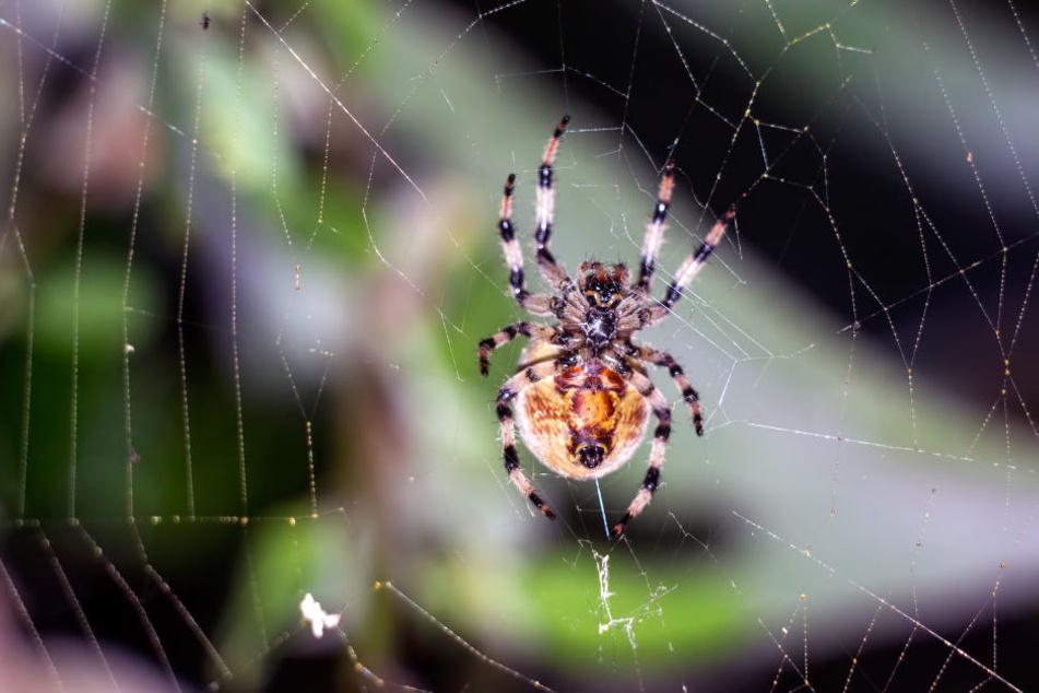 Von einer Farbe fühlen sich Spinnen offenbar besonders angezogen. (Symbolbild)