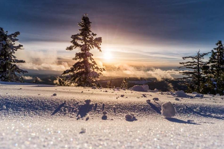 Traumhafte Winterlandschaft: Ob es so auch zu Weihnachten im Freistaat aussieht? Die Chance wird von Jahr zu Jahr geringer, doch sie ist da.