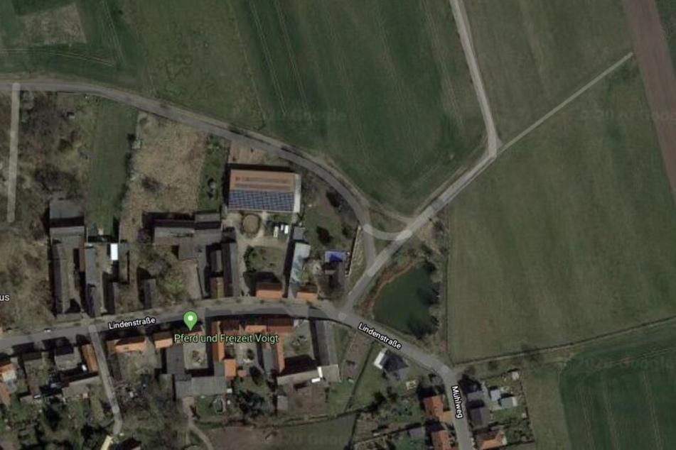 Die Überreste des Wildschweins wurden im Bereich der Lindenstraße im Markranstädter Ortsteil Altranstädt gefunden.