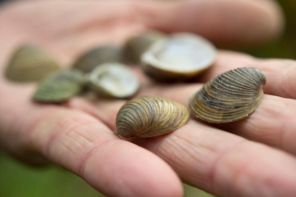 Muscheln und Korallen sind beliebte Mitbringsel aus dem Urlaub (Symbolbild).