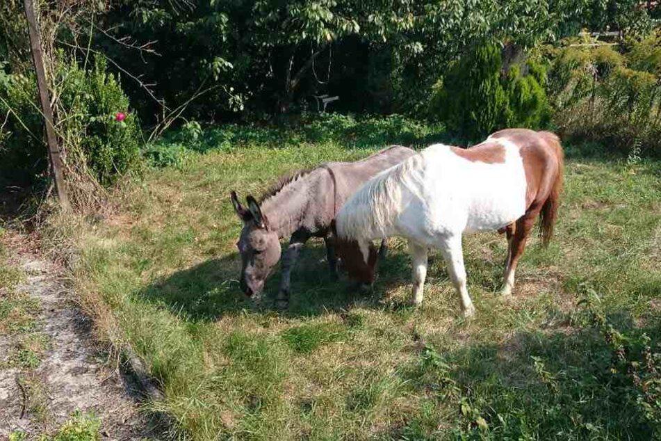 Ein Esel und ein Pferd haben sich in Kassel auf eine abenteuerliche Reise gemacht.