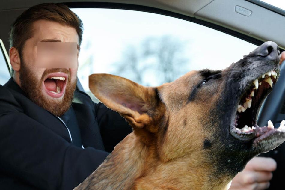 Zunächst fielen lediglich Worte, doch dann forderte der Fußgänger seinen Schäferhund zum Angriff auf. (Symbolbild)