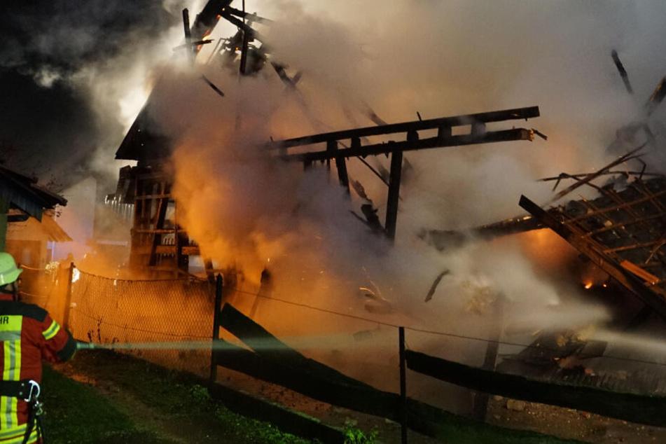Über 40 Rinder rennen nach Feuer frei herum