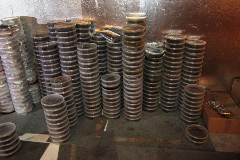 In diesem Keller fanden die Ermittler 1,6 Tonnen Tabak.