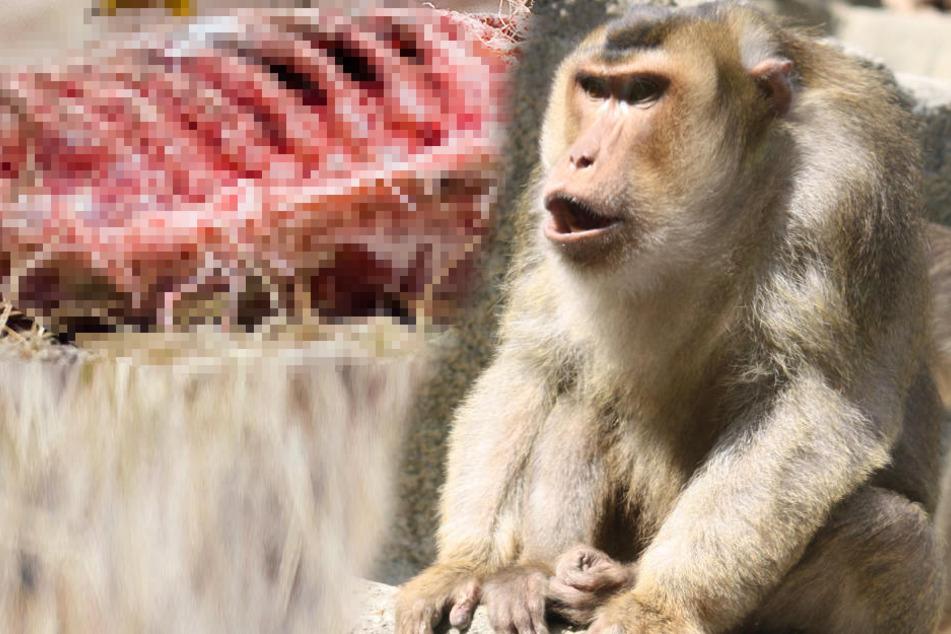 Aggro-Affe tötet Haustiere und bedroht ganzes Dorf
