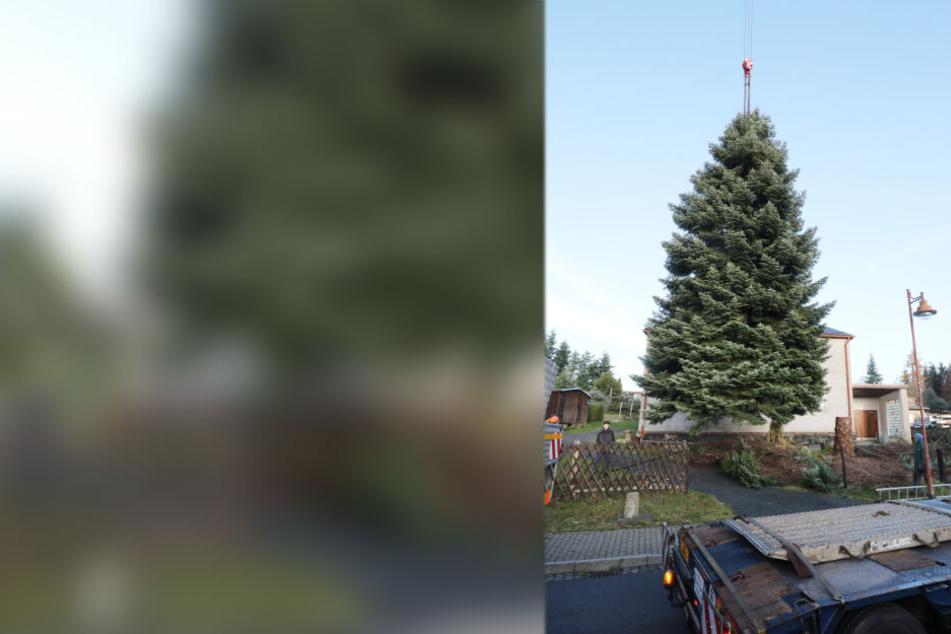 Thüringen fällt Weihnachtsbaum für Brandenburger Tor