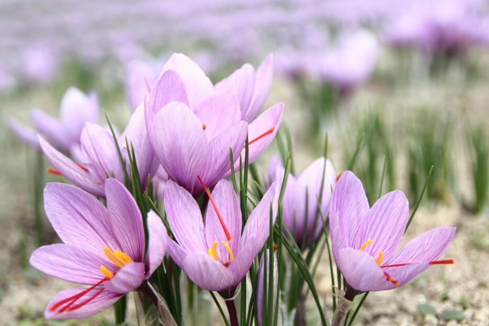 Der Frühling steht vor der Tür.