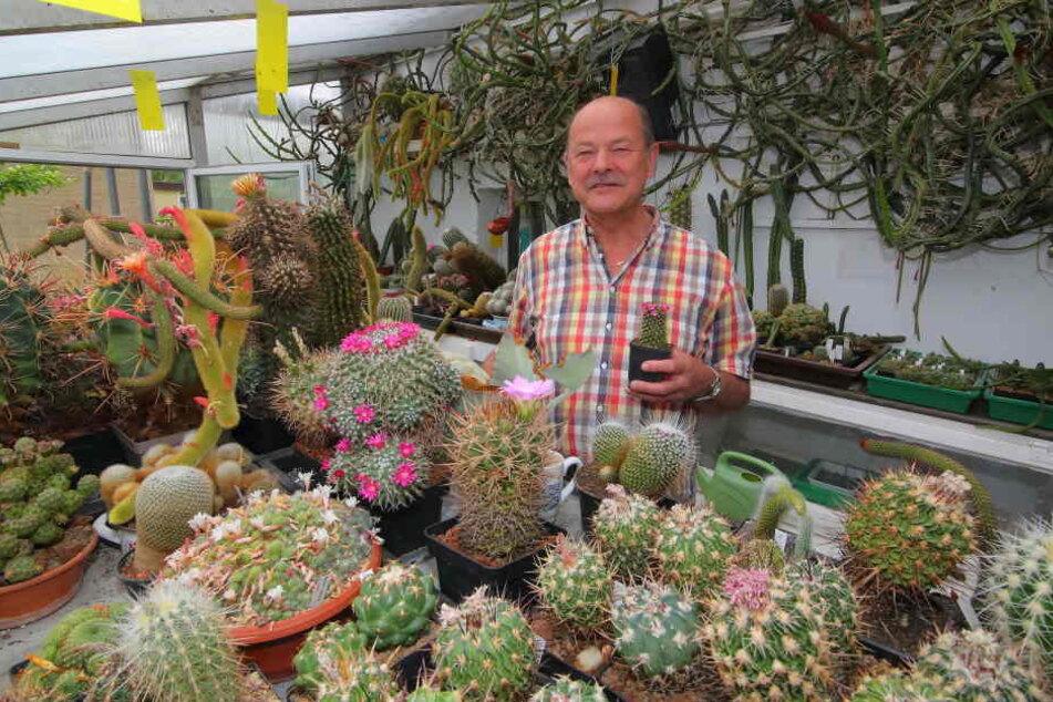 Werner Gräfe (68) hat ein Händchen für stachlige Pflanzen. Gut 3000 Kakteen hat der Hobbyzüchter daheim.
