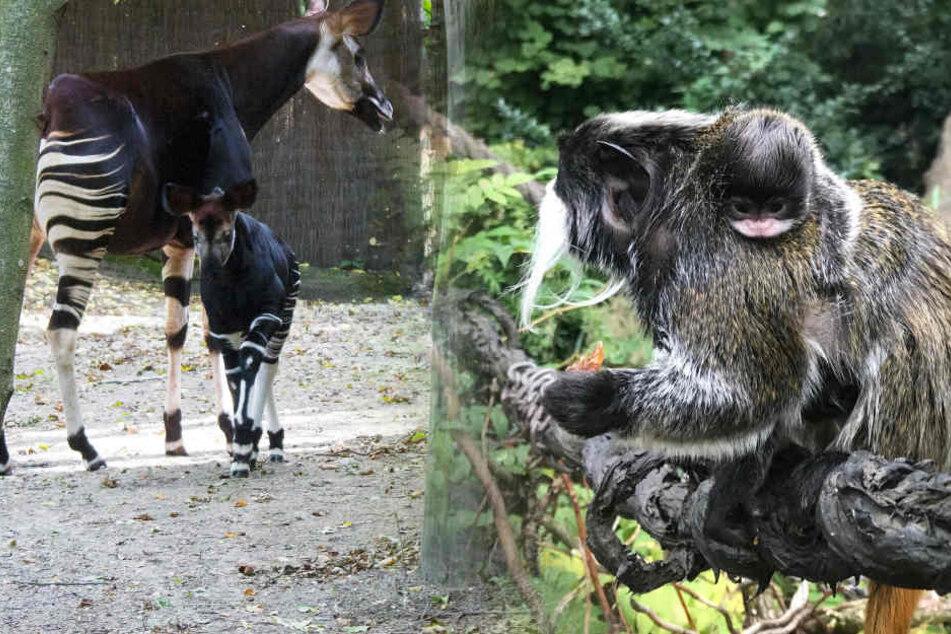Das wärmt von innen! Im Zoo Leipzig gibt's zuckersüßen Nachwuchs
