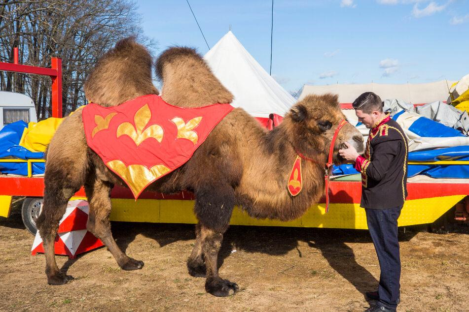 Jesse Endres (22) dreht mit einem Mongolischen Steppenkamel eine kleine Runde auf der Zirkuswiese.