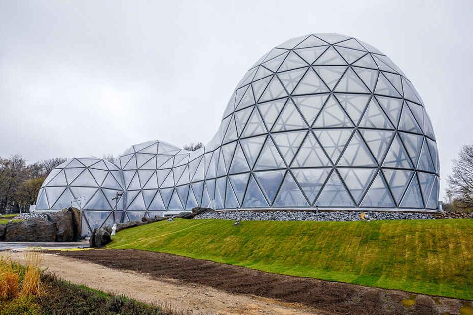 """Durch dieses neue Eingangsportal - """"Mitoseum"""" genannt - betreten Besucher  künftig den Saurierpark Kleinwelka."""