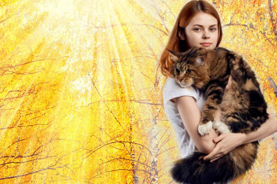 Die 5 beliebtesten Katzenrassen: Vom Riesen bis zum Exoten