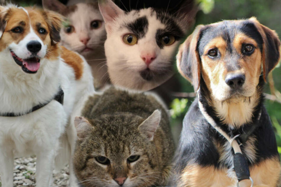 Süße Hunde und kuschelige Katzen: Deshalb suchen sie ein neues Zuhause