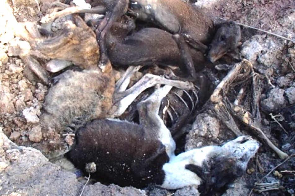 Tierquälerei: Der Züchter muss sich für diese grausamen Zustände verantworten!