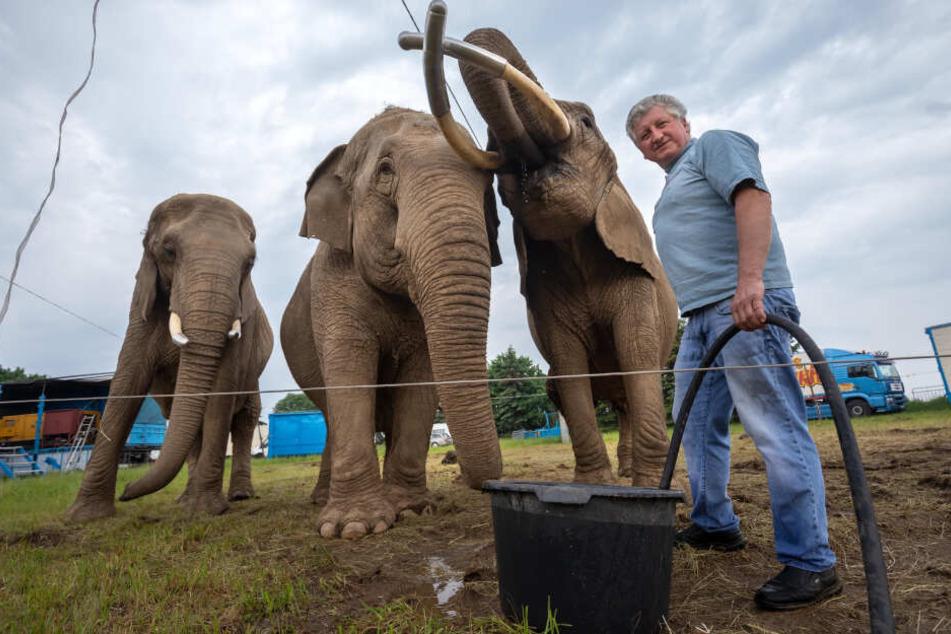 Zirkusdirektor Hardy Weisheit (52) und seine drei Elefanten Moja, Gandhi und Tonga.