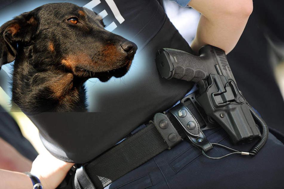 Polizei Erschießt Hund