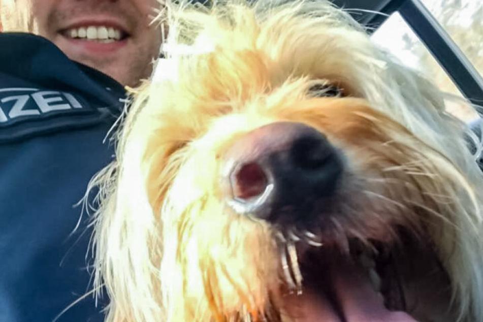 Warum macht dieser zottelige Hund ein Selfie mit der Polizei?