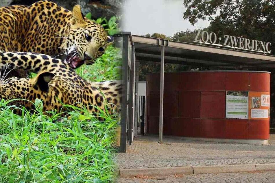 Neue Liebeshöhle: Zoo-Besucher sollen für Leopardensex zahlen!