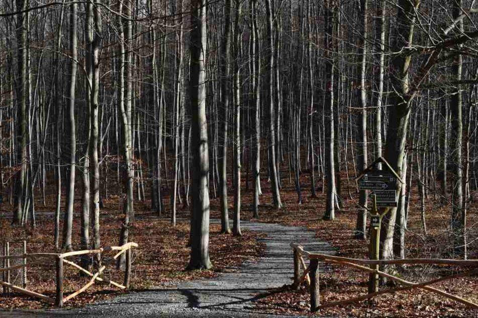 In Bad Berka kann man sich auf 50 Hektar naturnah beerdigen lassen.