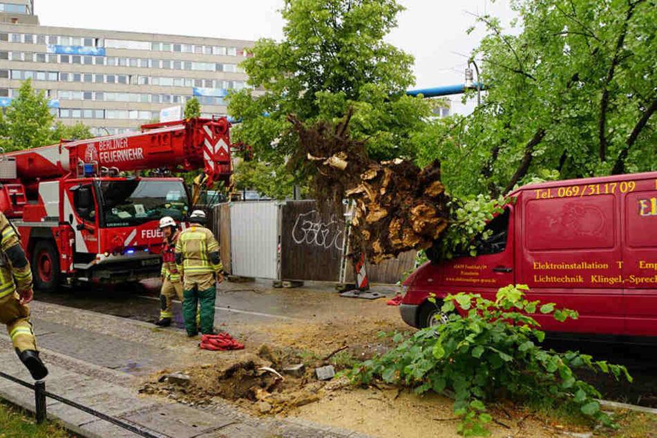 Ein Baum stürzte auf einen Transporter. Der Fahrer konnte sich über den Beifahrersitz befreien.