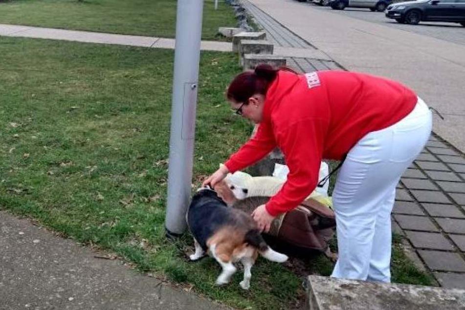 Eine Tierheim-Mitarbeiterin kümmert sich um die kranke Beagle-Hündin.