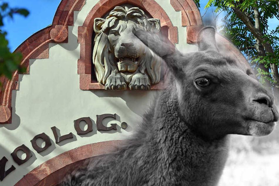 Leipzig: Traurige Nachrichten: Leipziger Zoo-Star Horst ist tot