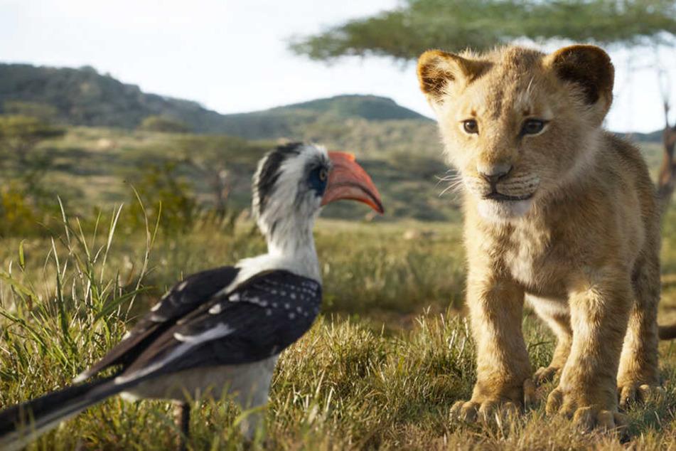 Simba (r.) mit seinem Berater und Bewacher Zazu.