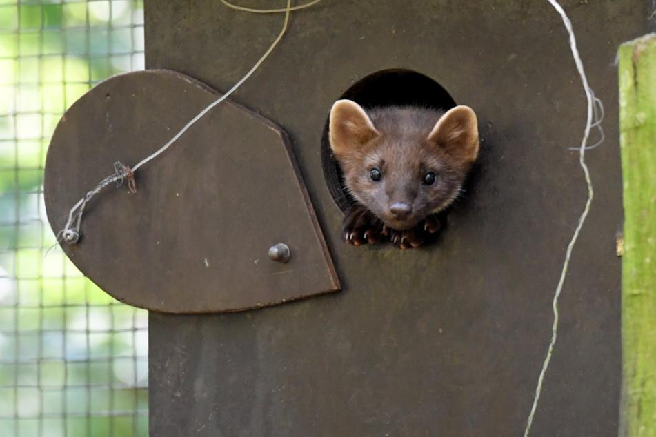 Neues Besucher-Highlight? Süße Tier-Babys im Wildpark Eekholt geboren