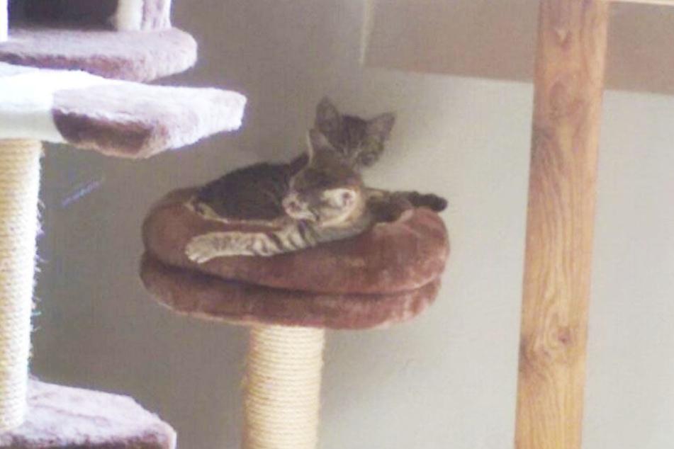 Im Zimmer extra für Katzenbabys warten unter anderem diese zwei Kätzchen auf ein neues Zuhause.