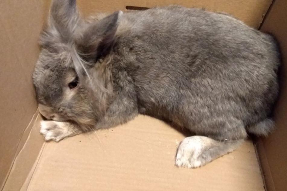 Das Kaninchen saß in einem Karton in der Tonne.