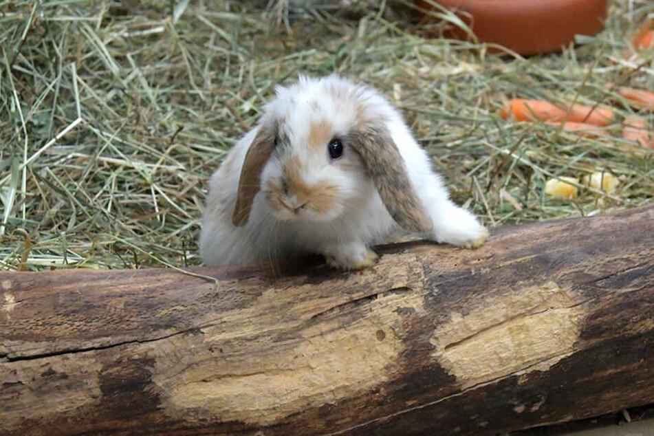 Auch dieses süße Kaninchen ist zu haben.