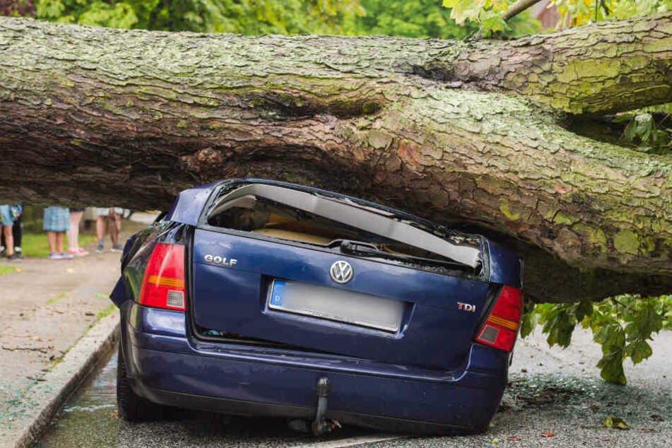 In Hamburg stürzte ein Baum auf ein parkendes Auto. Verletzt wurde dabei niemand.