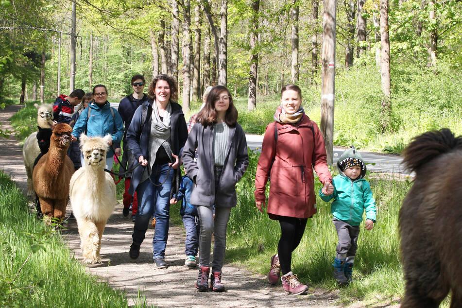 Eine Bürogemeinschaft aus Plauen nahm an einer der ersten Führungen mit den Alpakas durch den Stadtwald teil.