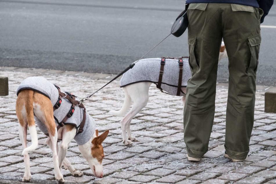 Hunde können mit einer Decke vor der Kälte geschützt werden.