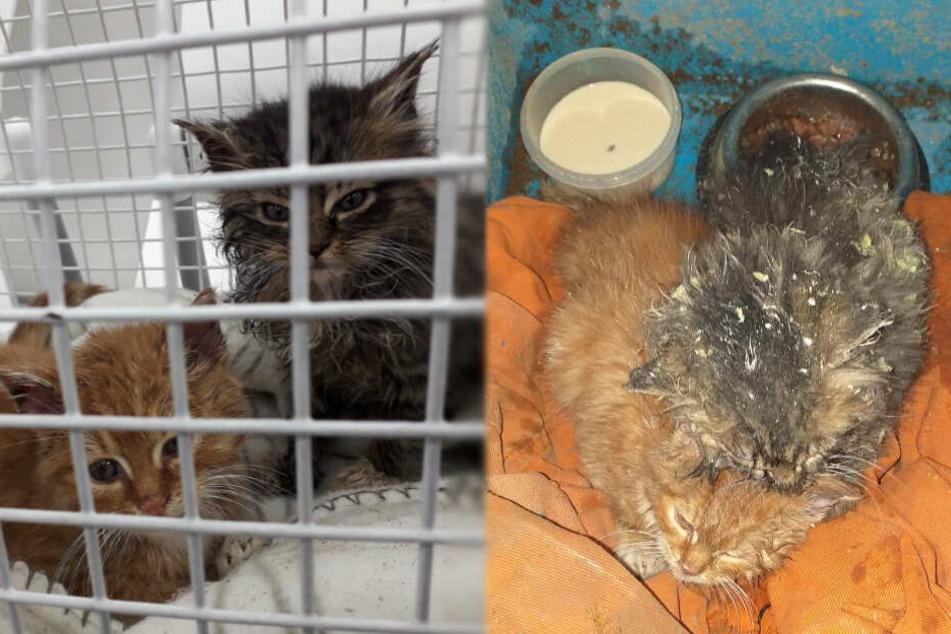 Dicht aneinander gekuschelt versuchen sich die Kätzchen zu wärmen. Selbst einige Zeit nach der Rettung sahen sie immer noch sehr zerzaust aus.