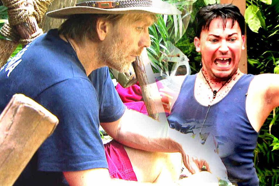 """""""Ich könnt ihm eine klatschen!"""" Dieser Nervtöter geht allen auf den Dschungel-Sack"""