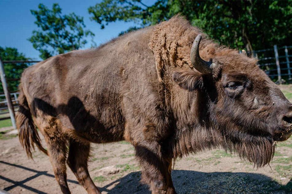 Nach Verwüstung: Tierpark Hirschfeld bekommt Geld von Versicherung