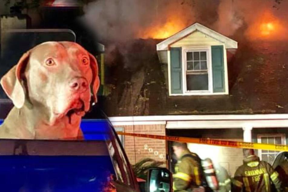 Hund rettet Familie vor Feuer: Trotzdem gibt es traurige Verluste
