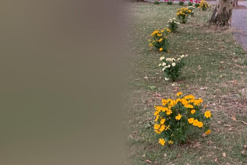 Darum wird dieser Blumengruß für einen Hobbygärtner ziemlich teuer