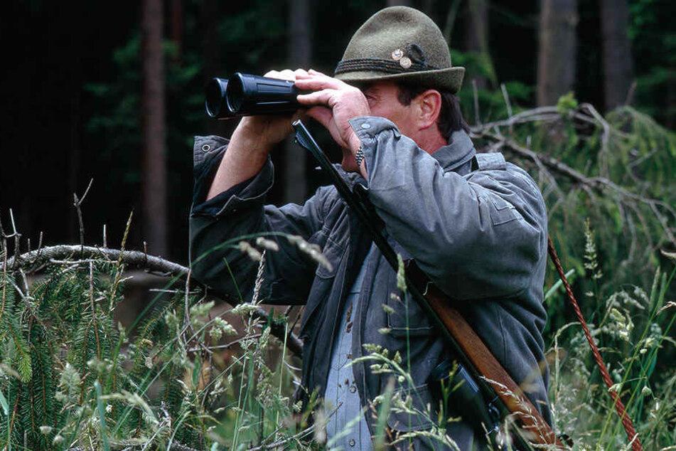 Die Jäger wurden angehalten, besonders aufmerksam auf kranke Wildschweine zu achten. Der Schießbefehl wurde verschärft.